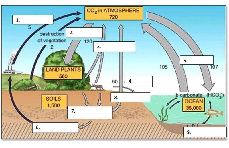 Blank carbon cycle diagram printable diagram schematic ecology 8 3 water cycle diagram printable colorable blank carbon cycle diagram printable ccuart Gallery